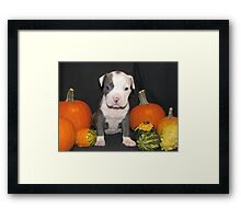 What Is Halloween ?? Framed Print