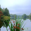 Lake and Reeds at Witley Court by JohnYoung