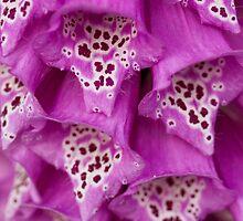 Floxglove Flowers by Melissa Thorburn
