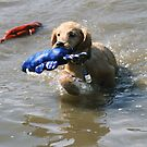 Joey First Water Toy Fetch by goldnzrule