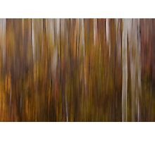 Fall Aspen Motion Blur Photographic Print