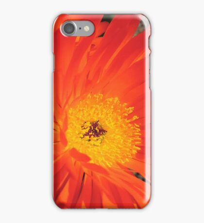 Spring Blooms of an Orange Ice Plant  iPhone Case/Skin