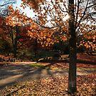 Autumn Light  by Lisa Cook