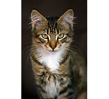 Ken The Cat Photographic Print