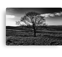 The Lonely Tree - Landscape Photograph Canvas Print