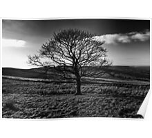 The Lonely Tree - Landscape Photograph Poster