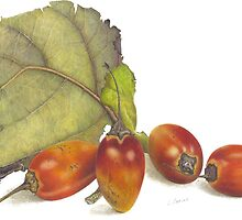 tamarillos take 2 by LindaCamac
