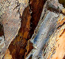 Rough textures in bark; Abstract. by ronsphotos