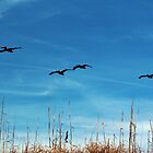 Flying Lessons by Cynthia48