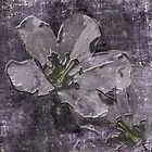 Wild Geraniums Go 3-D by MotherNature