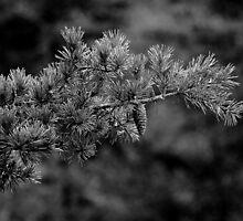 Ever Black&White by Adam Kuehl