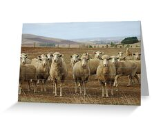 What are ewe's looking at? Greeting Card