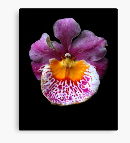 Unique Orchid  Canvas Print