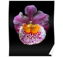 Unique Orchid  Poster