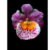 Unique Orchid  Photographic Print