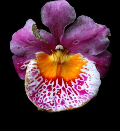 Unique Orchid  Sticker