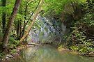 River greenery by Patrick Morand