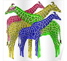 Giraffes of color  Poster
