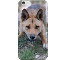 Playful Dingo iPhone Case/Skin