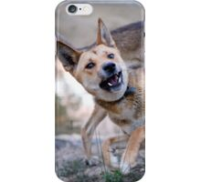 Playful Dingoes iPhone Case/Skin