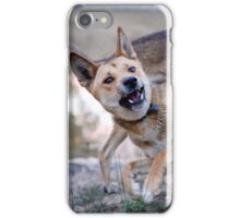 Playful Dingoes iPhone Case/Skin