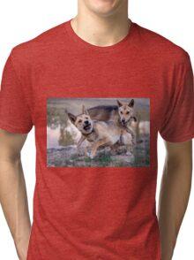 Playful Dingoes Tri-blend T-Shirt