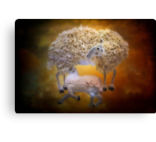 The softness of wool Canvas Print