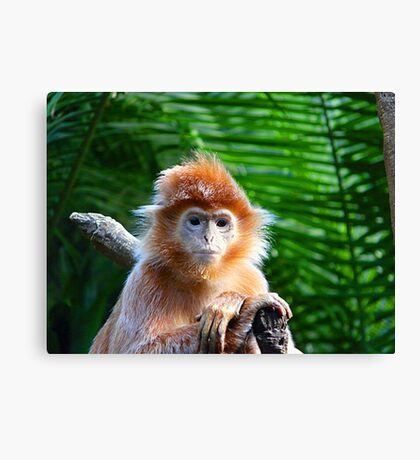 GUESS WHO WON THE STARING CONTEST? Canvas Print