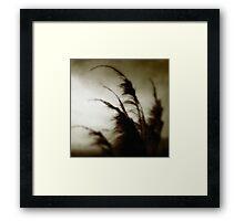 Phobos. Framed Print