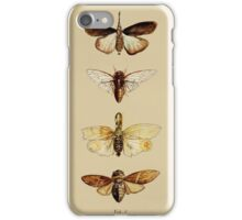 Entomology studies fig. 1 iPhone Case/Skin