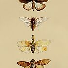 Entomology studies fig. 1 by djrbennett