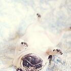 UpSiDEdOwn Pug by NJMphotography