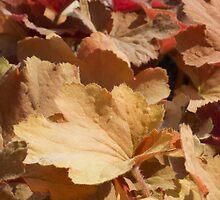 leaf background by spetenfia