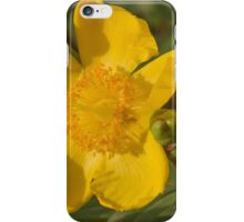 yellow buttercup iPhone Case/Skin