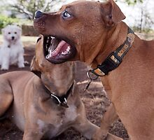 Dogs with game face on .24 by Alex Preiss