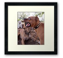 Dogs with game face on .24 Framed Print