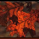 Autumn Pair by Sheryl Gerhard