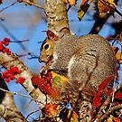 Messy Eater by Debbie Oppermann