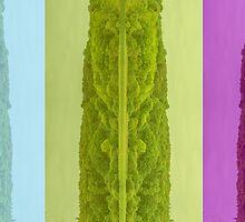 Lough Gill abstract by Mark Bangert