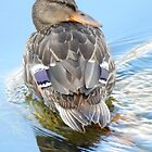 happy duck by Babz Runcie