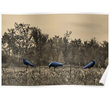 3 Crows in Field Poster