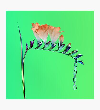 Flume Album Artwork Merch Photographic Print