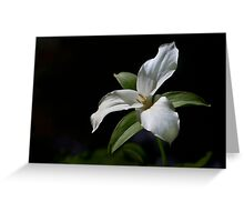 Trillium in partial shade Greeting Card