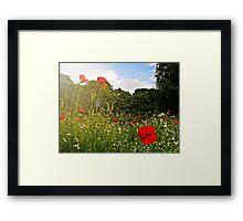 Sun kissed poppies Framed Print