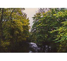 Green Trees Photographic Print
