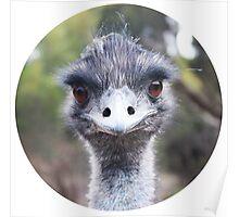 The Judging Emu - Comical Animals - Australia Poster
