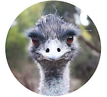 The Judging Emu - Comical Animals - Australia Photographic Print