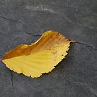 First Leaf of Fall by Kenneth Hoffman