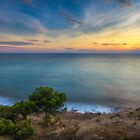 Trees by the sea at sunset by Ralph Goldsmith