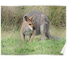 Black Striped Wallaby aka kangawallafox! Poster
